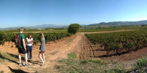 Barcelona: wine and cava tour