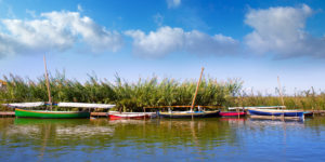Valencia Walking Tour and Albufera Trip
