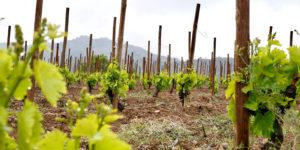 Tarragona: Priorat Wine Region