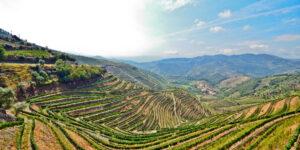 Douro Valley Tour - Vineyards near Pinhao, Portugal