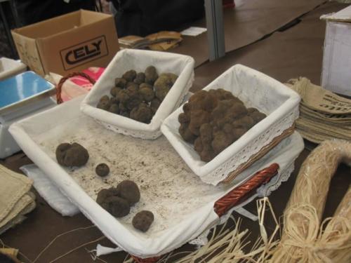 Spain Truffle Hunting - Truffle Market
