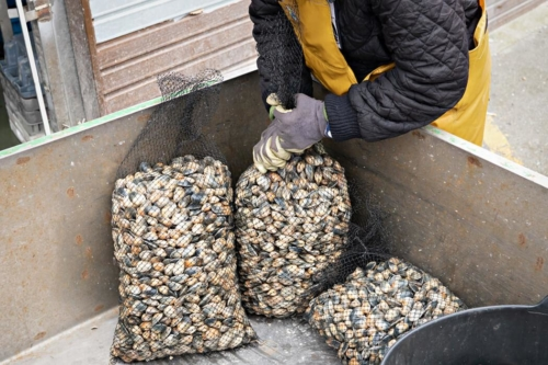 carril clams