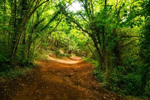 Garrotxa Hiking Tour