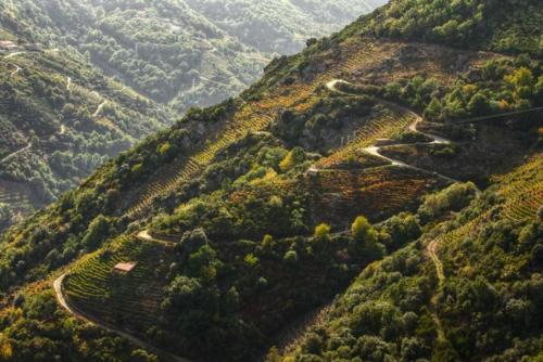 ribeirasacra vineyards